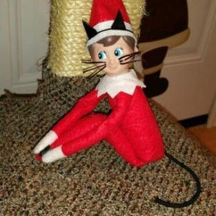 Meow | Elf On The Shelf
