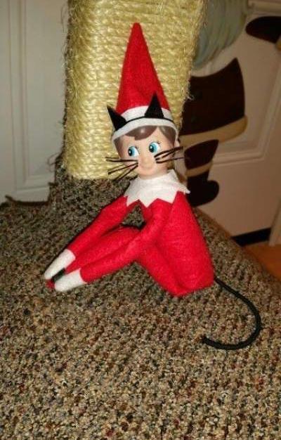 Meow | Elf On The Shelf