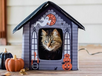 Heated Halloween Cat House at Chewy.com