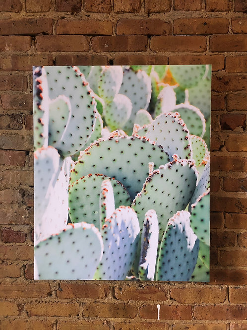 Green Cactus on Distressed Wood