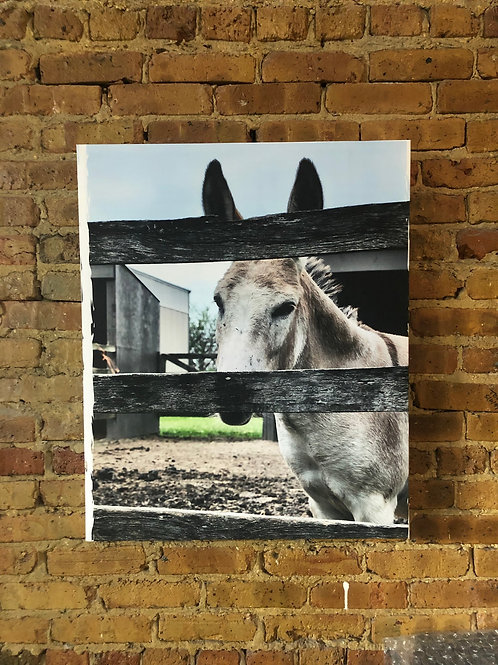 Mule on Distressed Wood