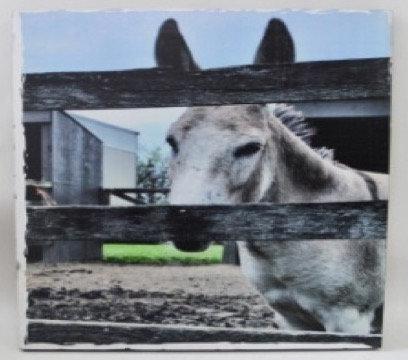 Mule on Wood