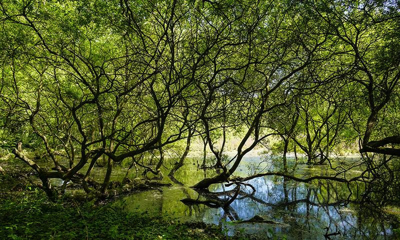 Chislehurst pond