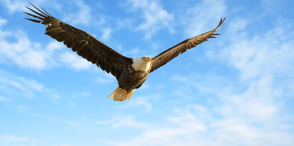 Bald-Eagle_Flying_CO-Shutterstock_edited