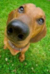 dog-nose_0.jpg