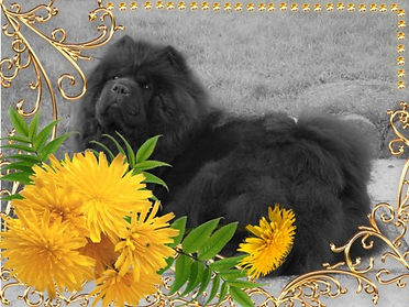 photofacefun_com_1550765584.jpg