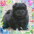 photofacefun_com_1456674257.jpg