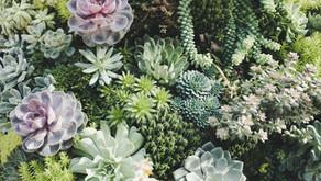 Plant Propagation Magic for Kids
