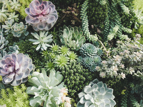 How To Create A Living Wall In Just A Few Easy Steps!