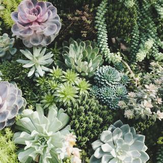We love plants!