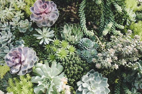 Cactus Flower & Jade All Natural  Cadle