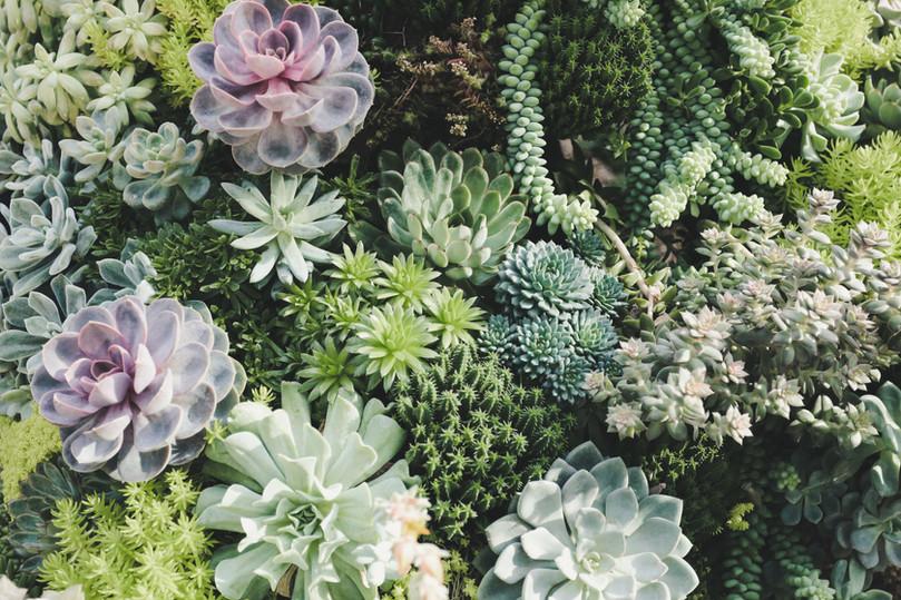Palette végétale