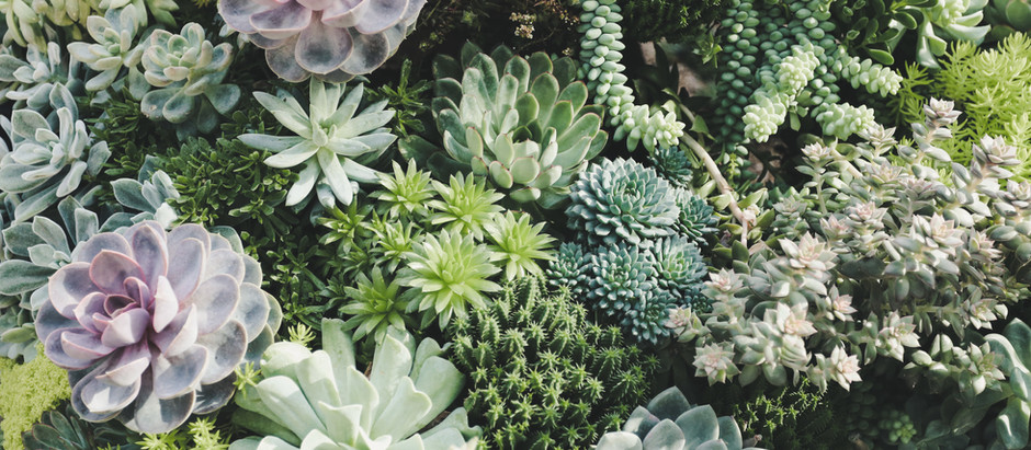 What's With The Succulents?