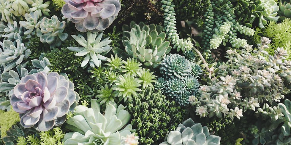 Succulent Workshop 101