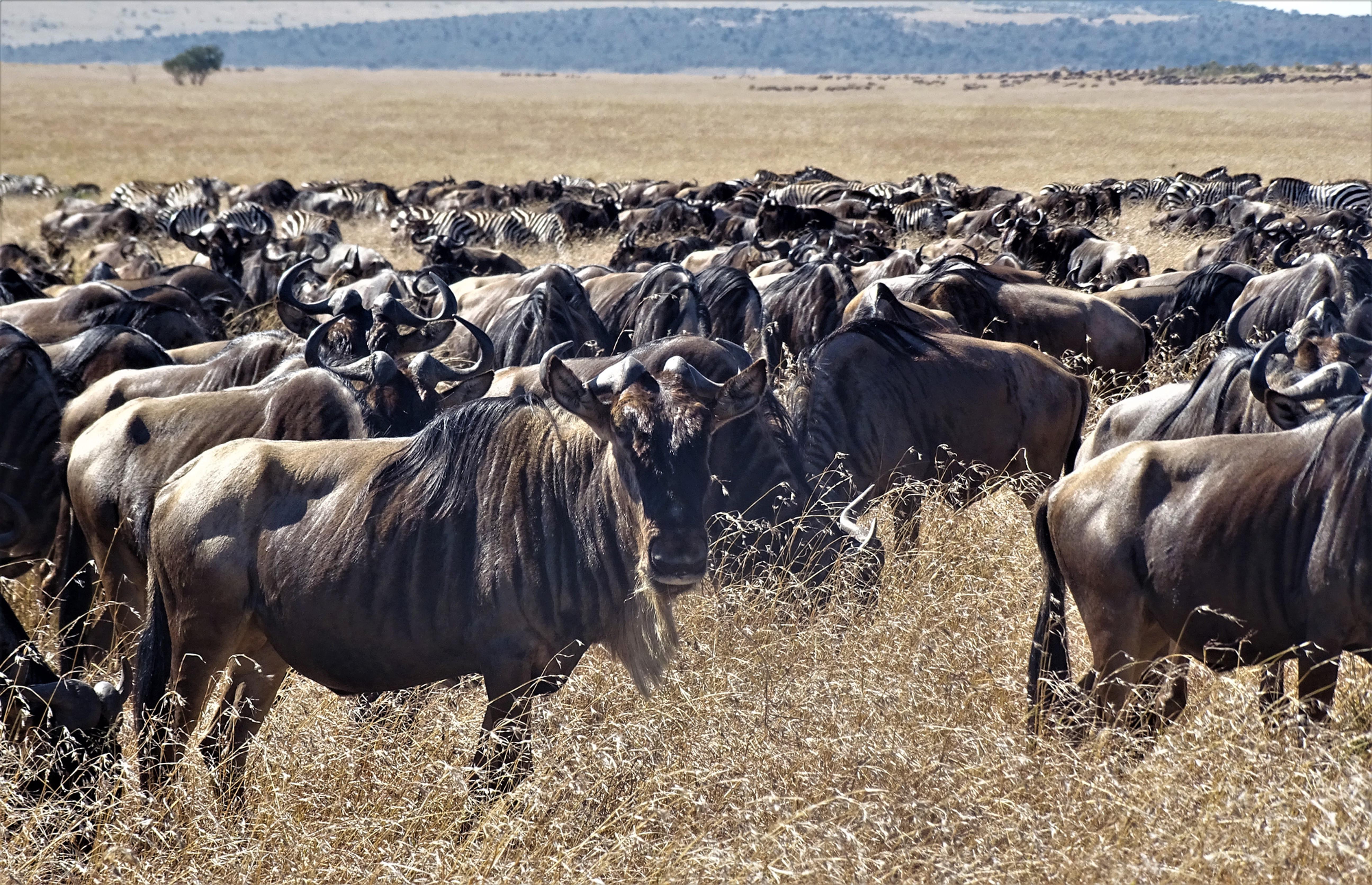 Masai Mara Safari for groups