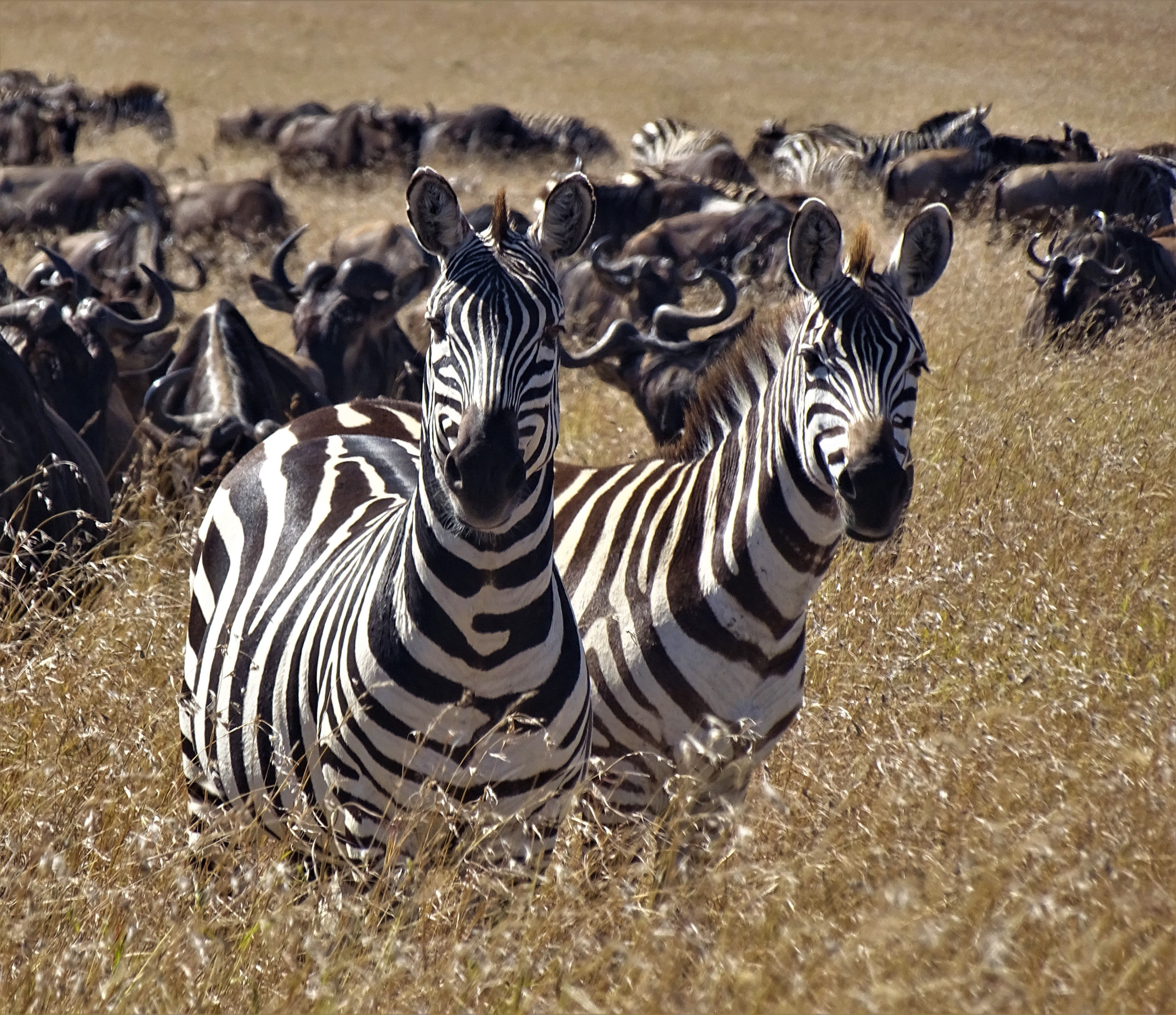 Masai Mara Safari for two