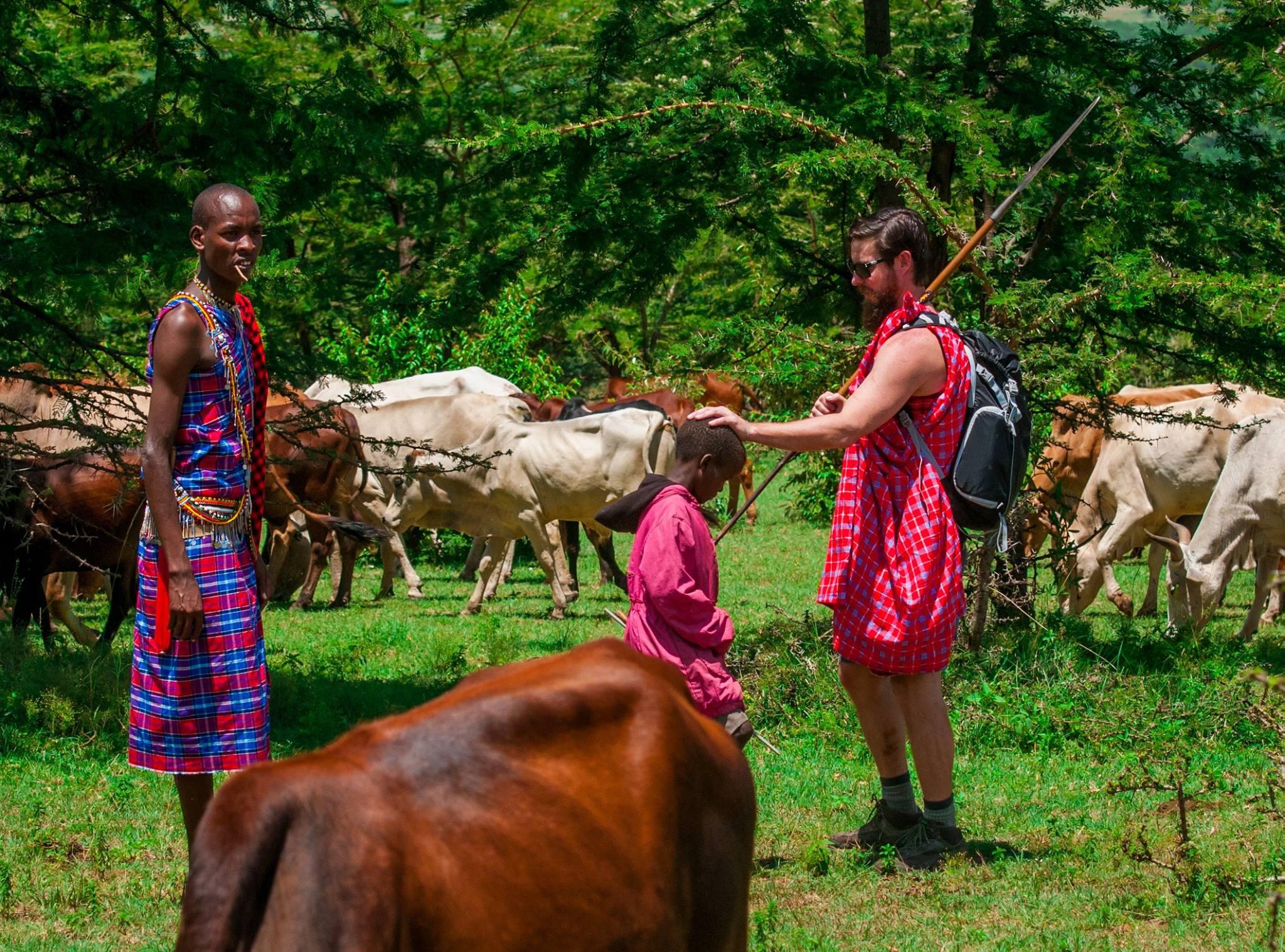 Herd cattle with Kenya's Maasai