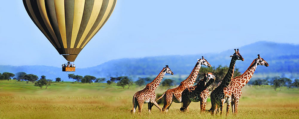 Flying over the Masai Mara...to see one of those wonderful giraffe!  A dream come true?
