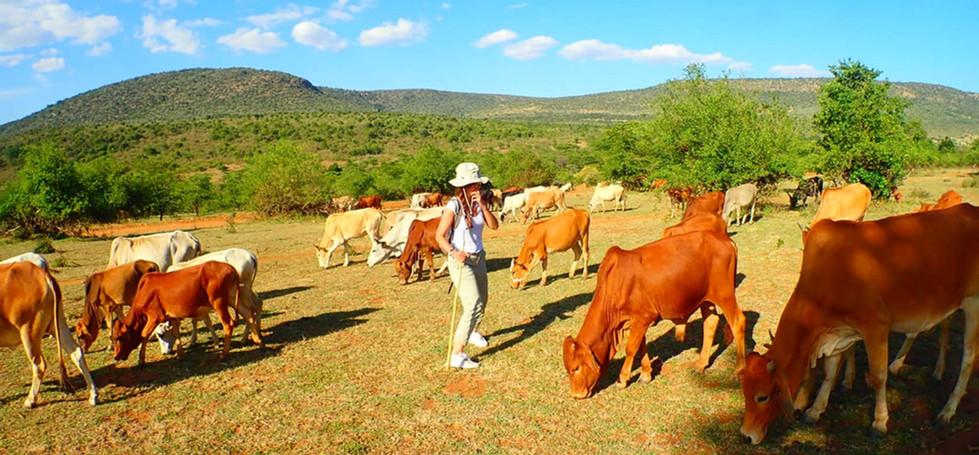 maasai herding experience