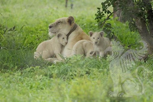 Gaia and Cubs cuddle WM.jpg