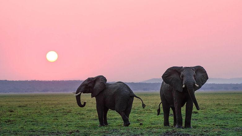 How Many Elephants Charity.jpg