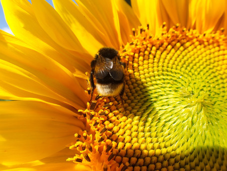 How to create abundance in your business - a message from nature