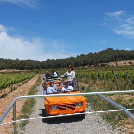 Adventure between the vineyards