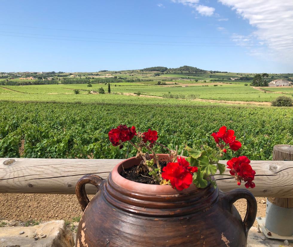 Paisaje vinícola del Penedés