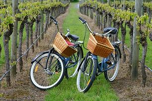 Bikes in vineyard.jpg