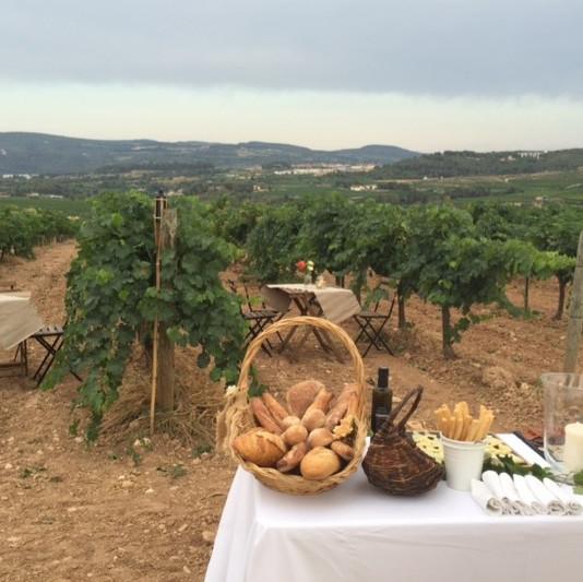 Picnic between vineyards