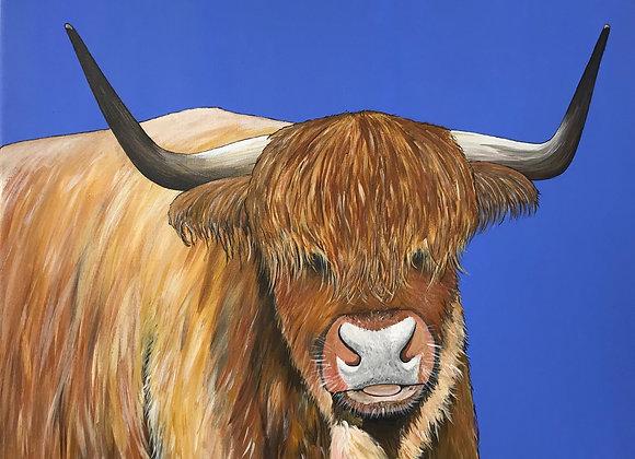 Eloise the Highland Cow