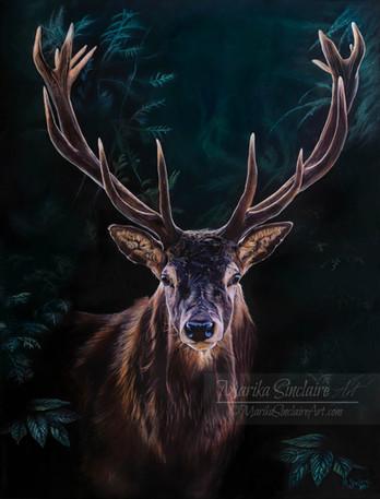 """""""Deer"""""""