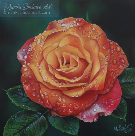 """Million Drop Rose"""