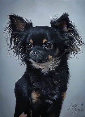"""Chihuahua Portrait"""