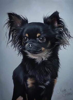 """Chihuahuaporträtt"""