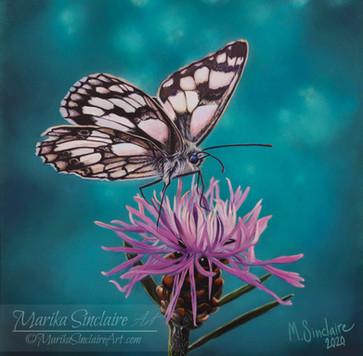 """""""Butterfly on flower"""""""