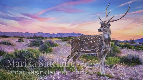 """""""Sunset Deer"""""""