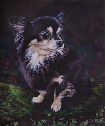 """""""Chihuahua Lollo"""""""