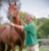 Maple Valley Farm LLC, Mikimoto's Mojo, Anna Binkley, Foaling, Breeding, Boarding, WV, Charles Town, Shenandoah Jct, Charles Town Races, VA, MD, KY