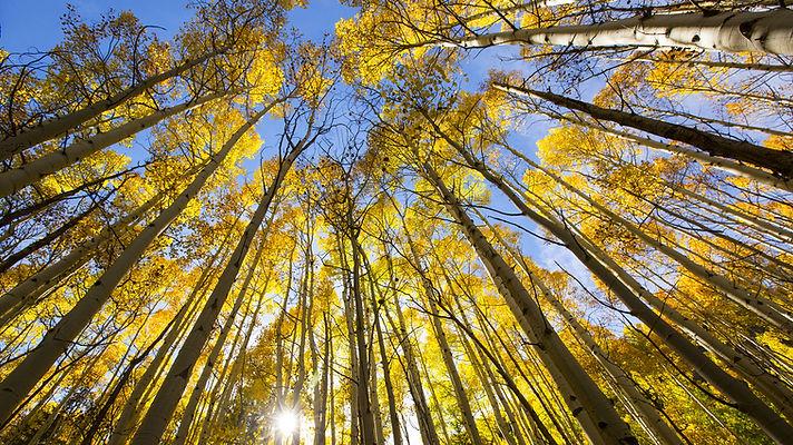 Leave leaved autumn trees