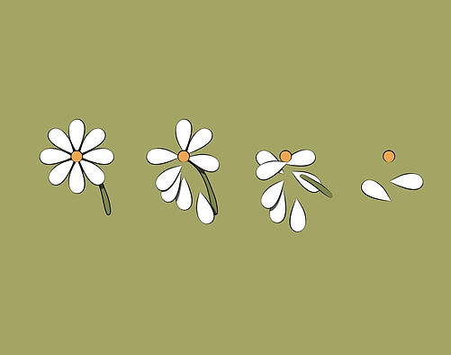 Native Seed_Illustration 2_Flower hand c