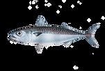 Fruits de Mer Broadstairs Fresh Local Fish Mackerel.png