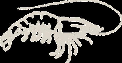 Prawn_illustration_light_flip.png