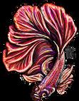 Beta Fish red.png