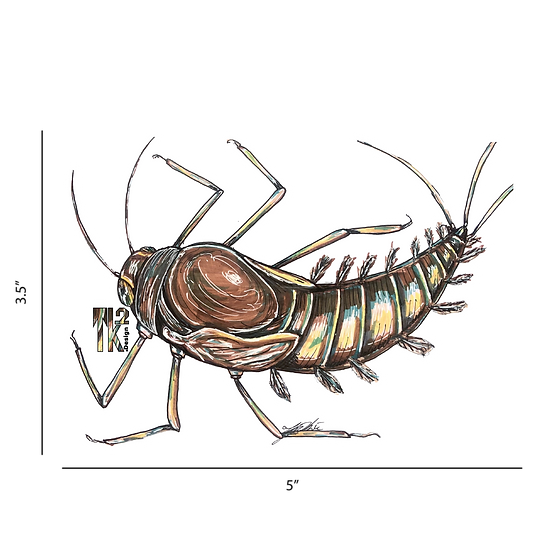 Callibaetis Bug Sticker