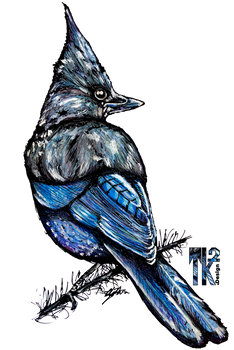 Mountain Magpie copy.png