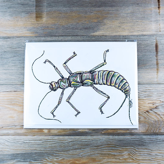 Stone Fly Drawing