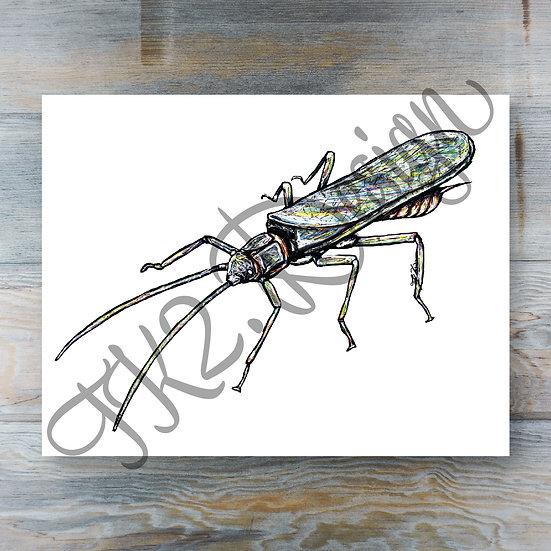 Stonefly Adult Print