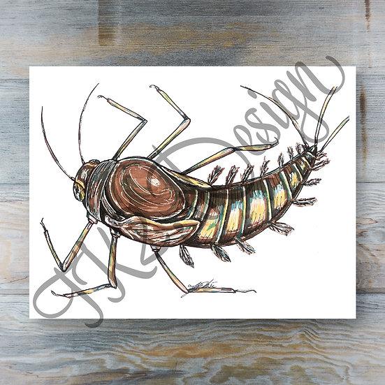 Callibaetis Bug Print