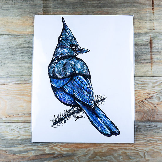 Stellar's Jay Drawing